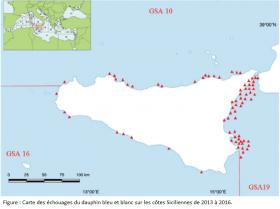 Carte des échouages du dauphin bleu et blanc sur les côtes Sicilliennes de 2013 à 2016.