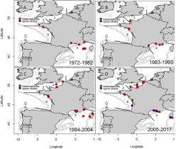 Répartition géographique des échouages de balaenopterides (points rouges) et de cachalots (points bleus) avec des preuves de collisions mortelles.